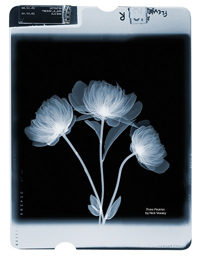 "NICK VEASEY started his professional life as a commercial photographer, but when he began doing X-rays it dovetailed his interests in the beauty of nature and of the X-ray. ""Hold a flower up to the light, and you'll see the veining, its intricacy and architecture,"" he says. Veasey marvels at the natural wonder of the plant. ""I never manipulate a flower so that it looks a certain way,"" he says. ""Nature manipulates us. My job is to keep the environment as stable as possible to get a good image."" Citing Victorian botanical illustrations as a source of his inspiration, Veasey has works in the permanent collection of the Victoria & Albert Museum in London. Three Peonies"
