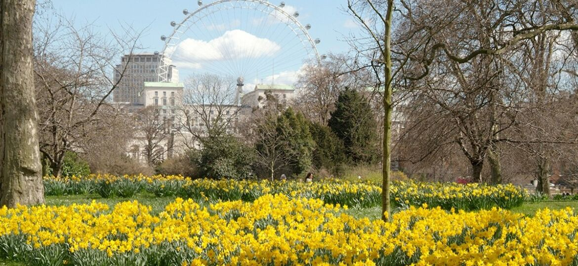 st, james, park, London, eye, view, daffodils, spring, springtime, in, tourist, attraction, city, tourism,