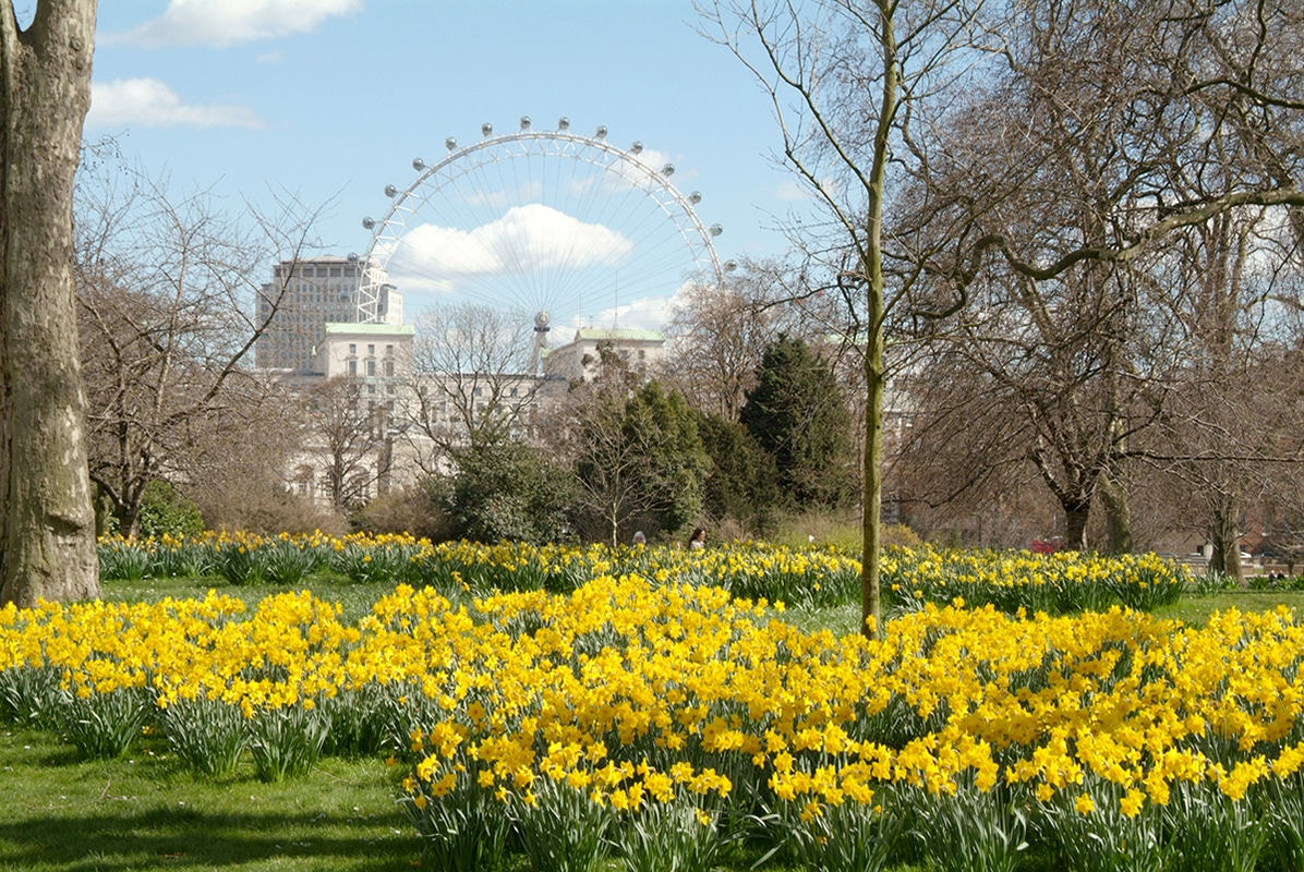 The Best Places To See Daffodils This Spring Flower Magazine