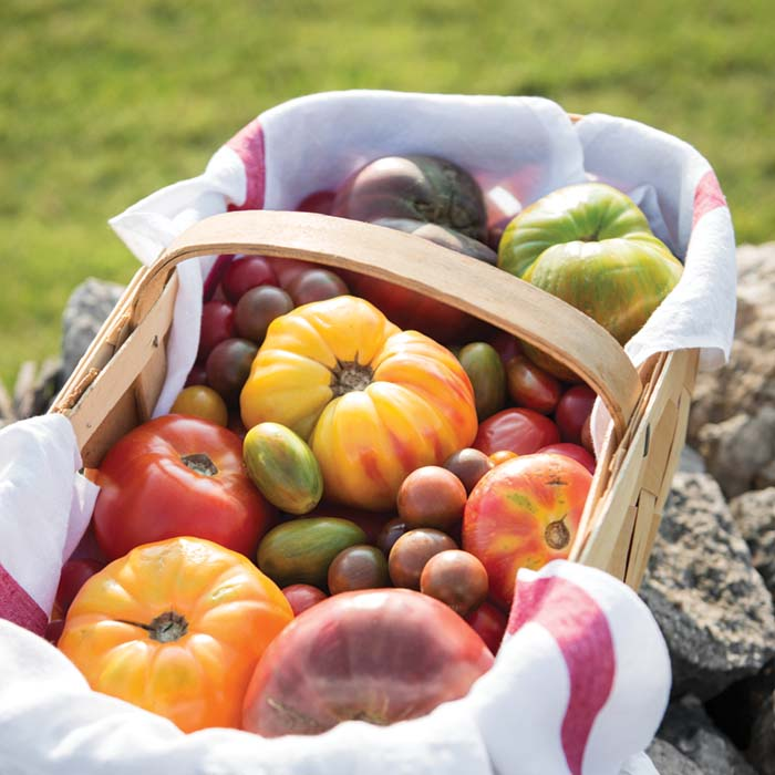 basket of heirloom tomatoes, of all colors and sizes