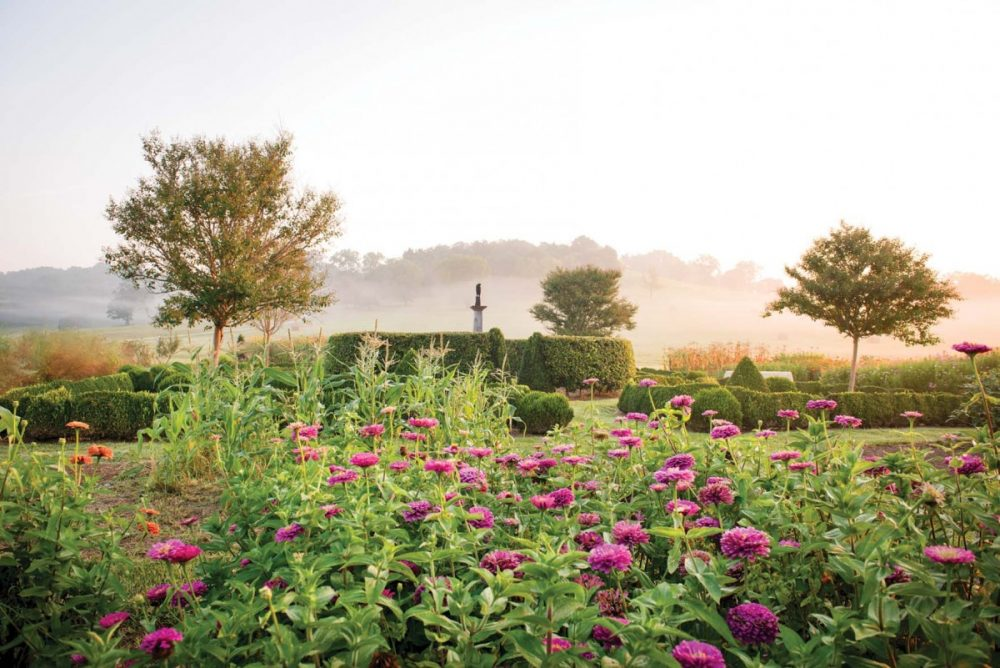 Zinnias and morning fog on Libby and Ben Page's farm, from the book Julia Reed's South.