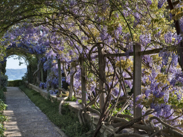 la foce, wisteria tunnel