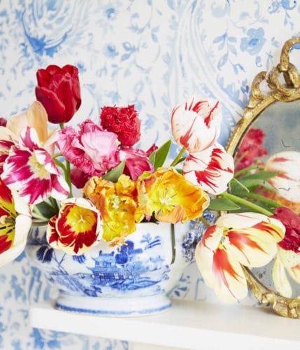 willow crossley tulips