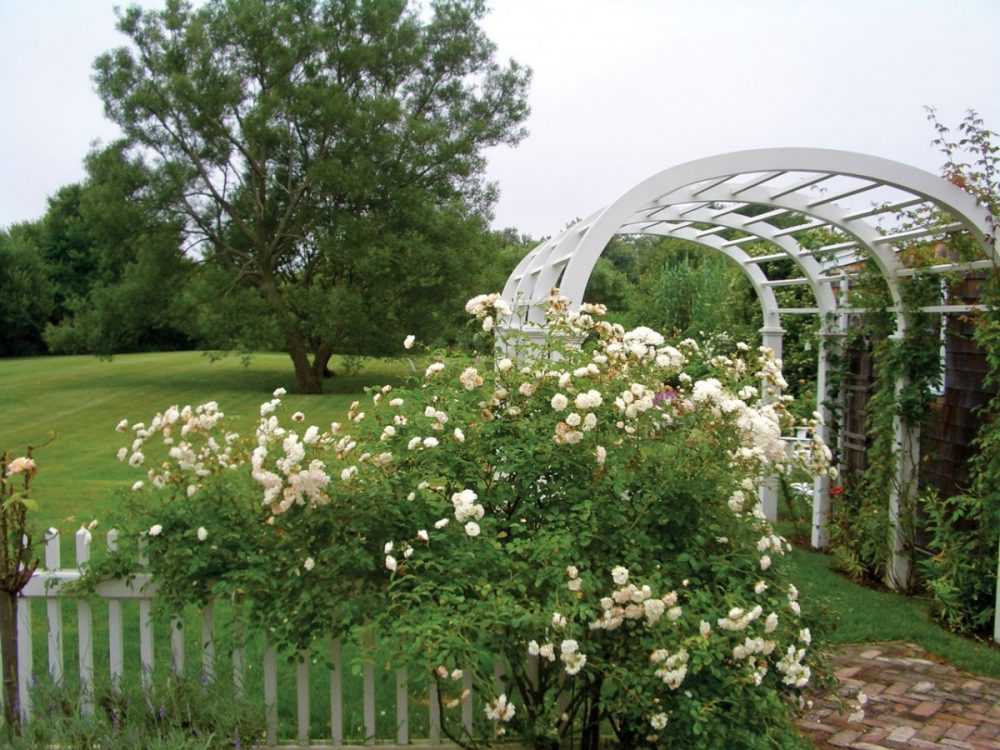 Hampton's rose garden and arbor