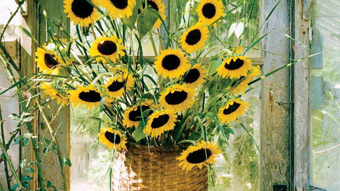 sunflower arrangements, basket flower arrangements