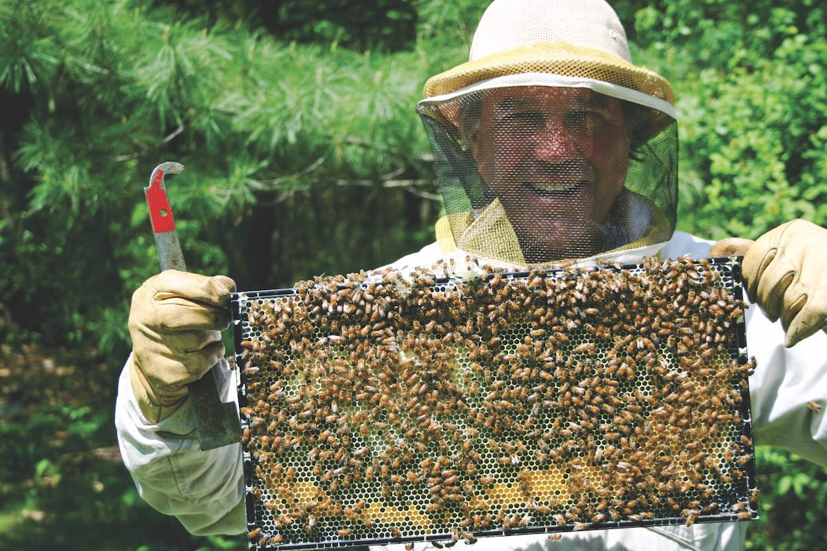 E.M. Swift with bees from one of his hives that he tends to in his backyard.