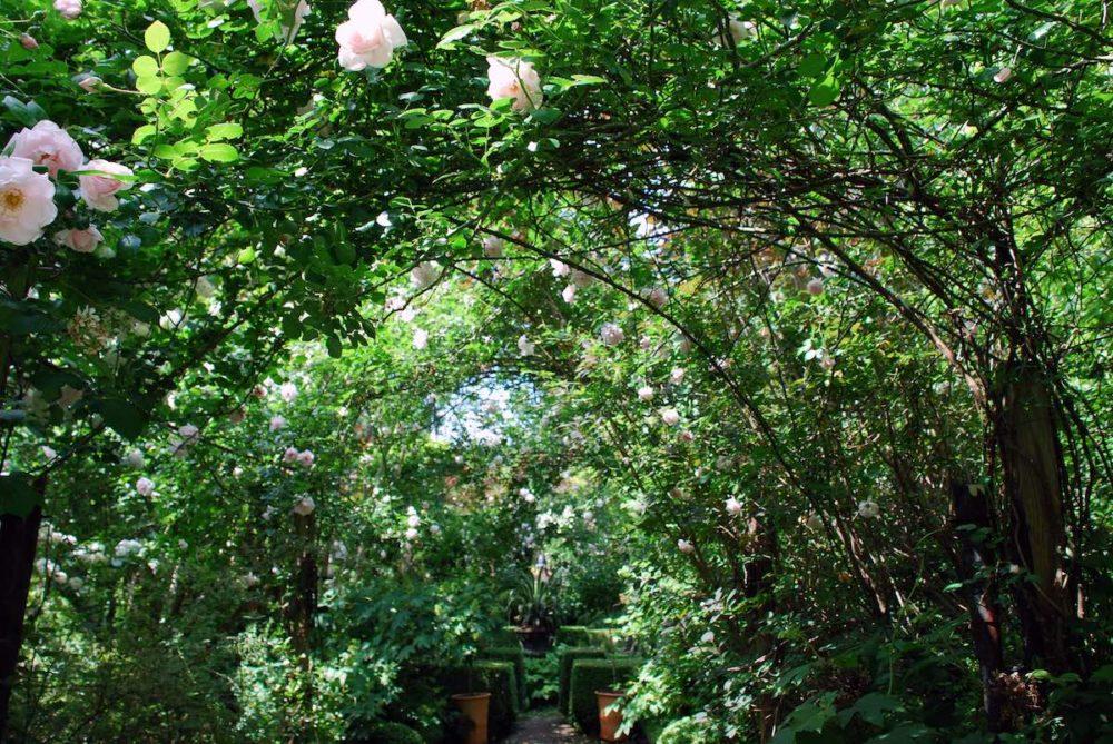 9 maneras de crear la apelación del encintado con las vides florecientes y los escaladores - Gardenista