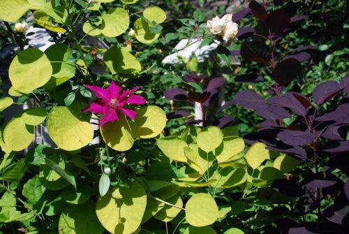 Plantas Trellis: ¿Cuáles son 10 de las mejores vides de enrejado floración?
