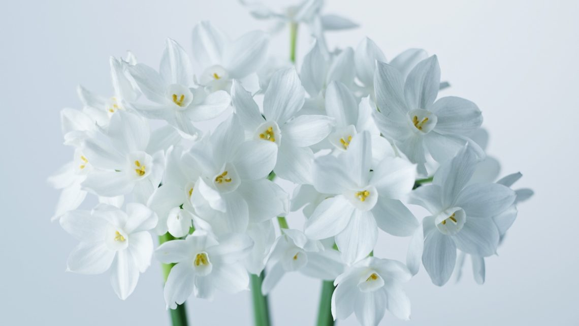 how to force paperwhites