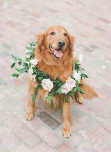 Tara Guérard wedding dog