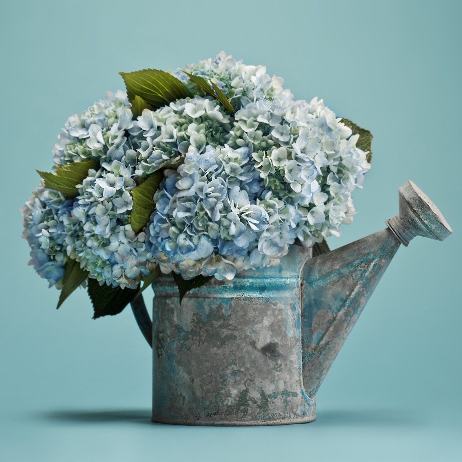 Our Favorite Hydrangea Arrangements Flower Magazine