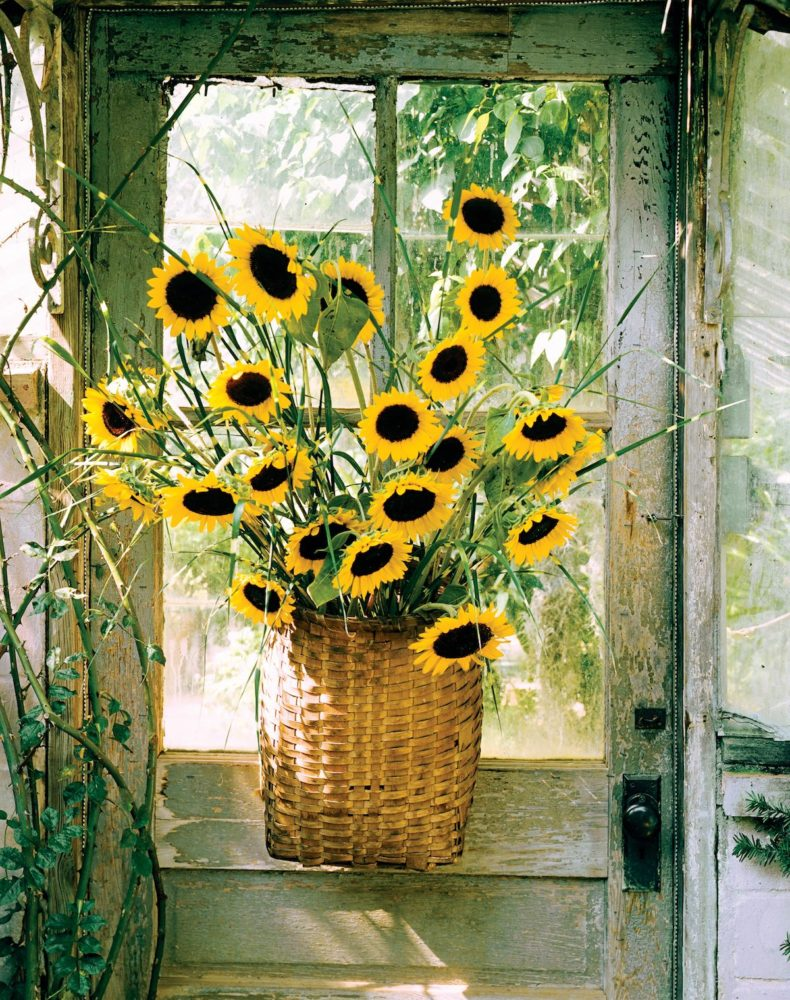 sunflower arrangments