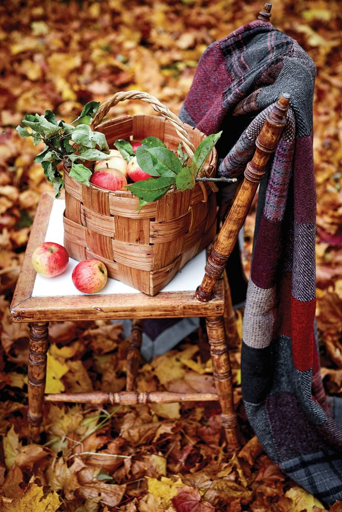 basket of apples on a chair set among fall leaves. A wool plaid throw is draped over the chairback