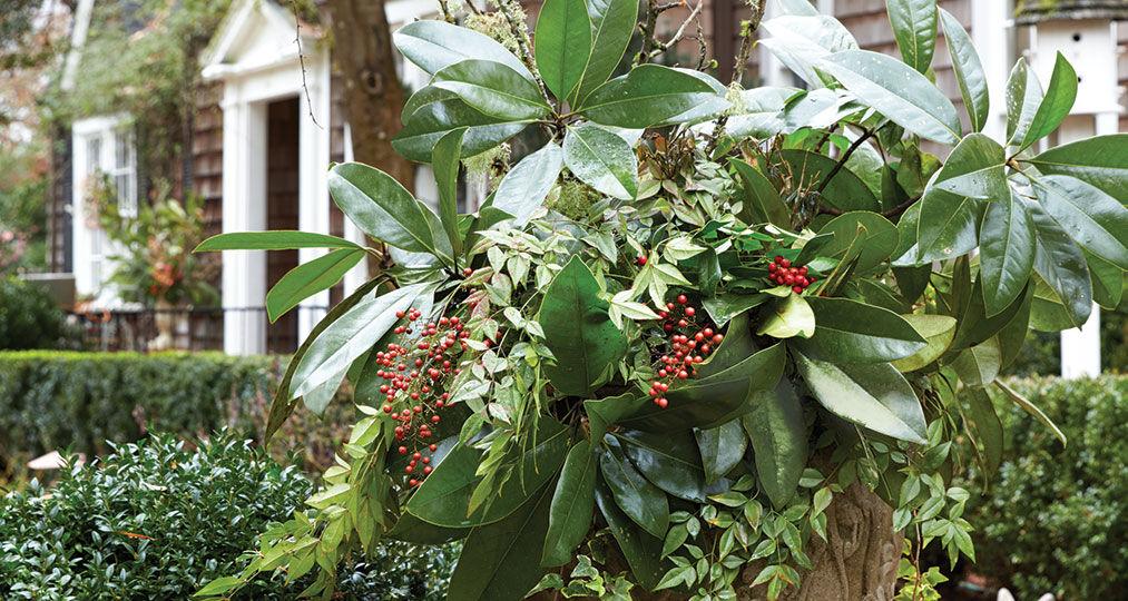 holly carlisle, ashley spotswood