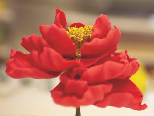 sugar flowers, ron ben-israel