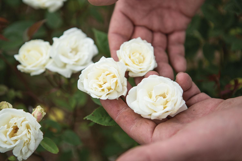 P Allen Smith Rose Garden Adventures In Roses Flower Magazine