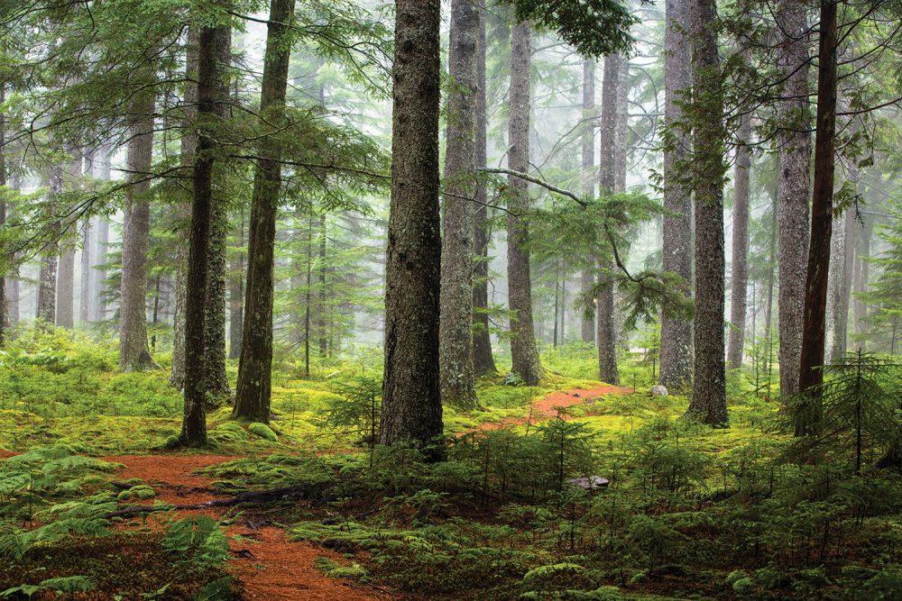 martha stewart's maine home, skylands, forest