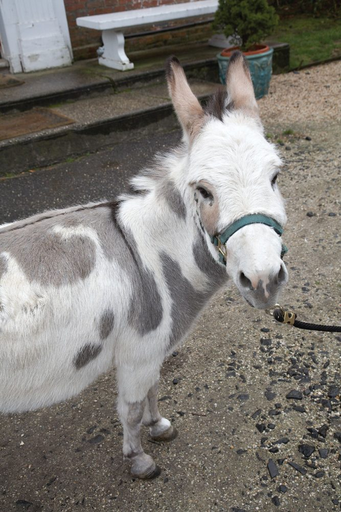 cornelia guest, madonna, donkey