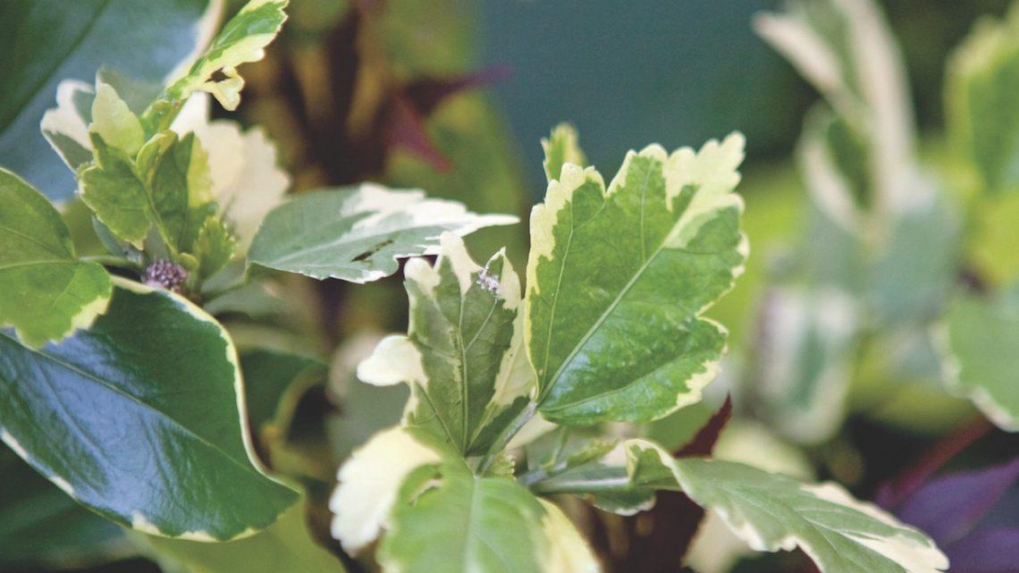 foliage for flower arrangements