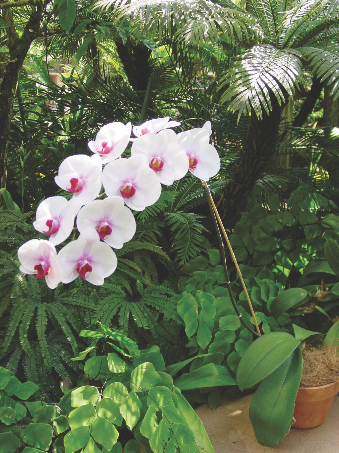 Growing Orchids At Home And Daily Care Of Flower