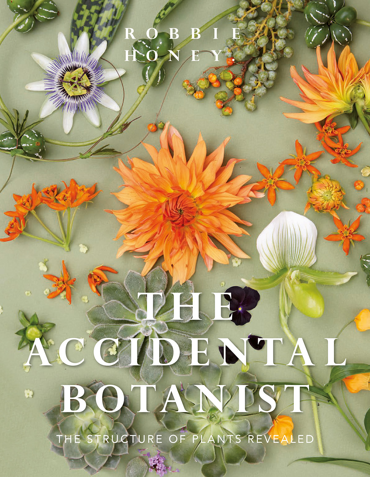 robbie honey accidental botanist