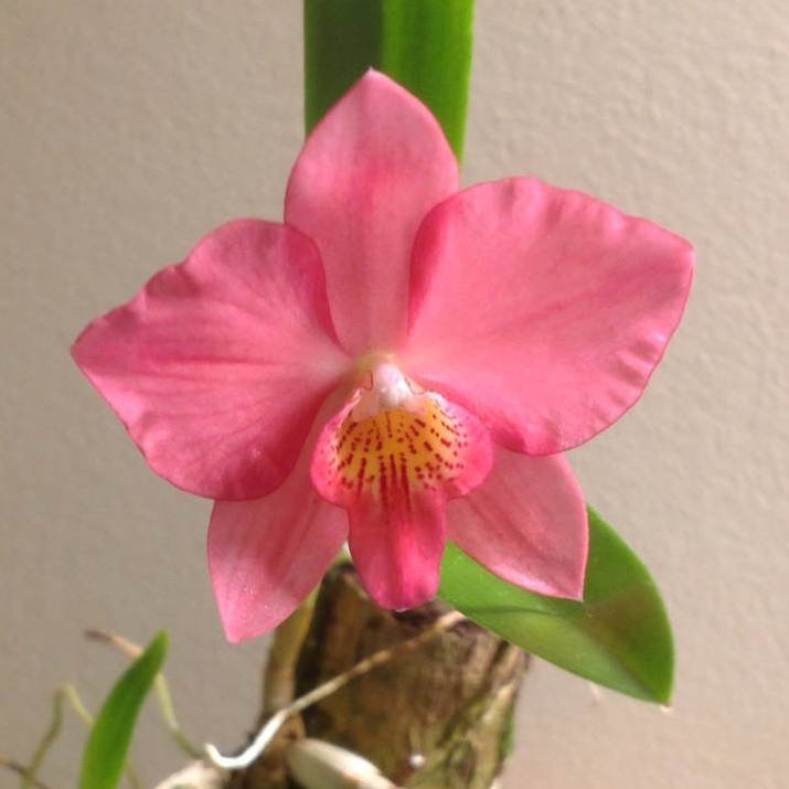 Growing Orchids At Home And Daily Care Of Orchids Flower Magazine