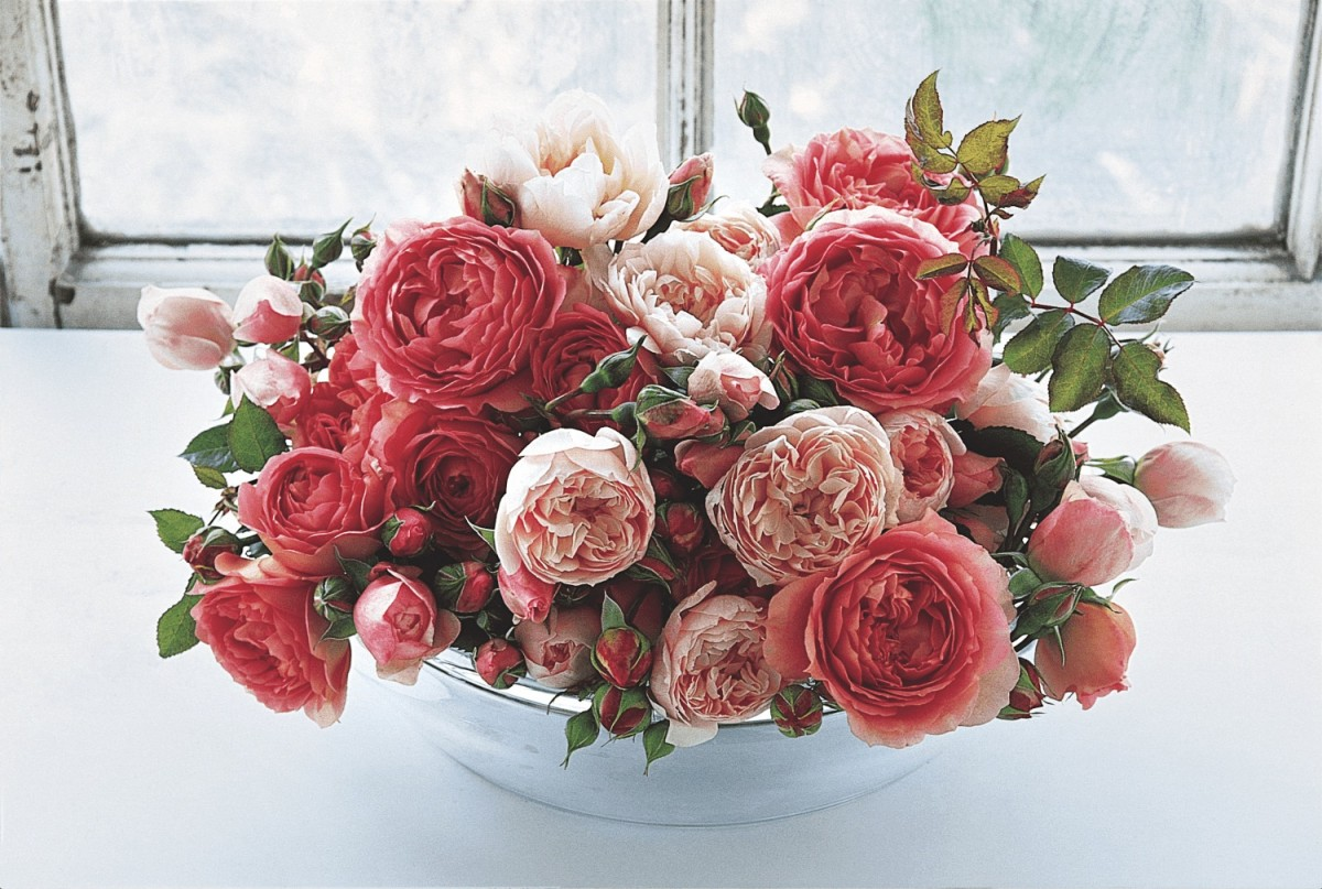 English Roses And Growing English Garden Roses Flower Magazine