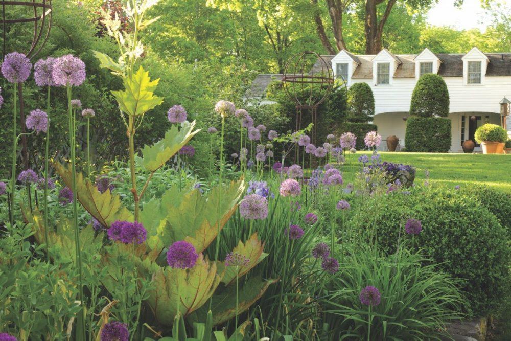 Bunny Williams garden, alliums