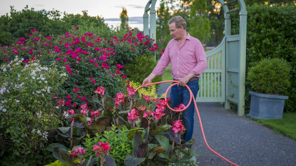 summer flower garden maintenance