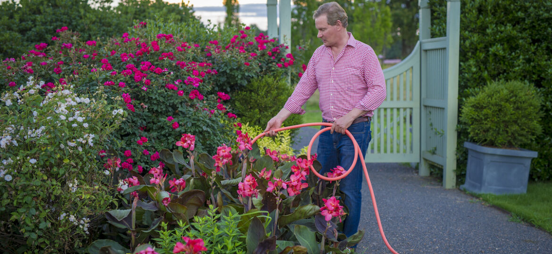 summer flower garden maintenance