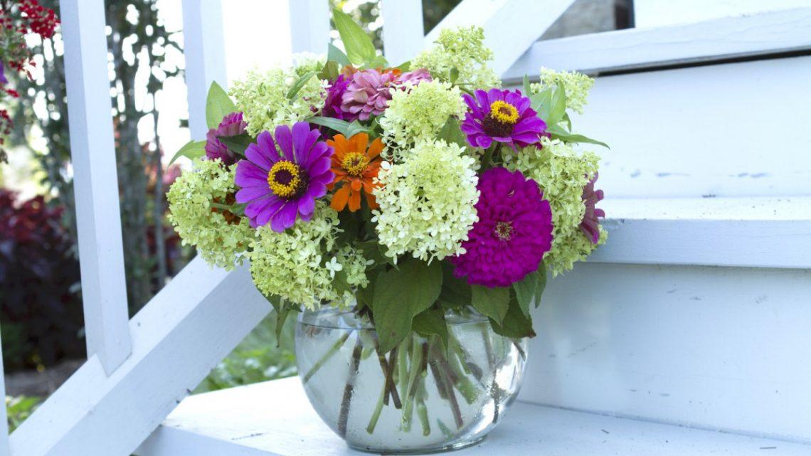 growing zinnias, zinnia flowers, zinnia varieties