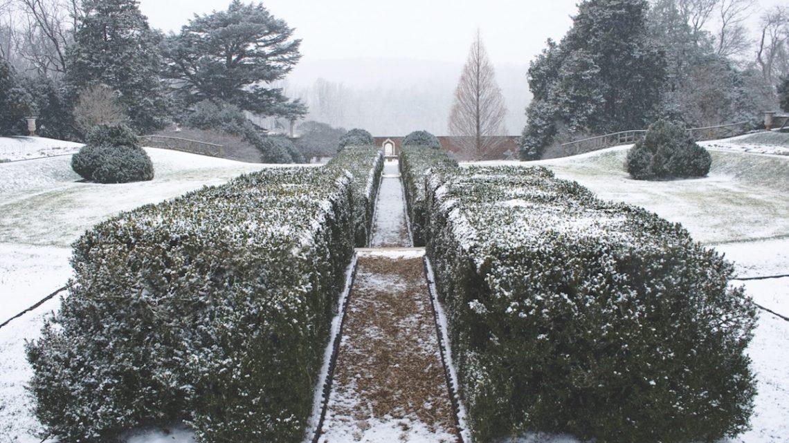 Montpelier, wintertime gardens