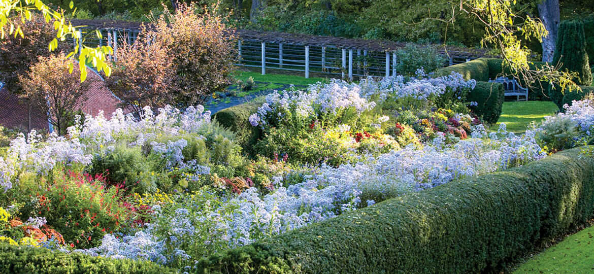 Photo of herbaceous flowers bordered by a boxwood hedge