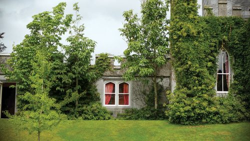 Lush greenery covers much of a merlon-topped, gray stone Irish castle. Red curtains are visible through pointed arch windows. A tree sapling planted in a neatly cut, bright green lawn stands in the foreground.