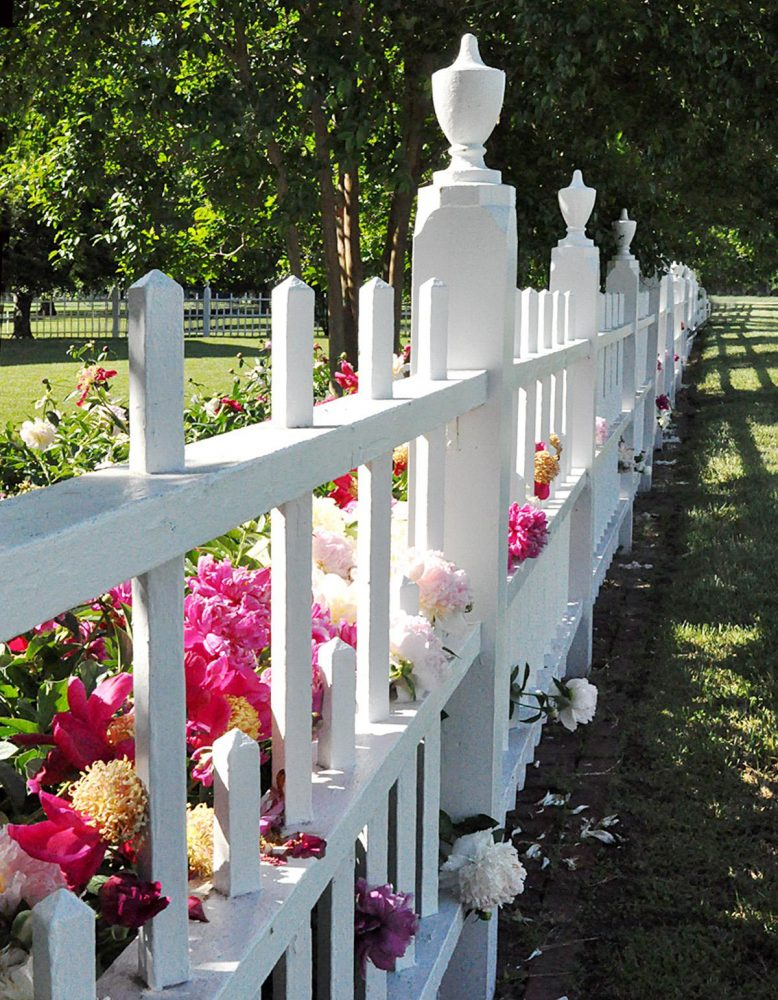 Peonies spill through a white picket fence in Eastern Shore, Virginia, featured on the 86th Annual Historic Garden Week in 2019