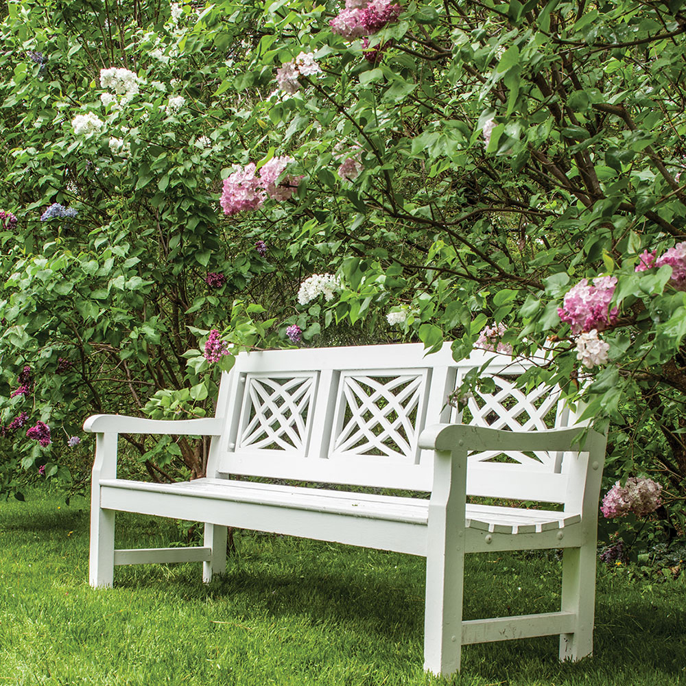 White wooden bench surrounded by lilac bushes