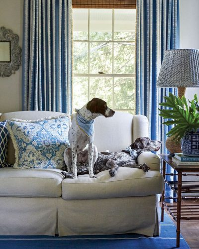 Two dogs wearing neck scarves lounge on a couch