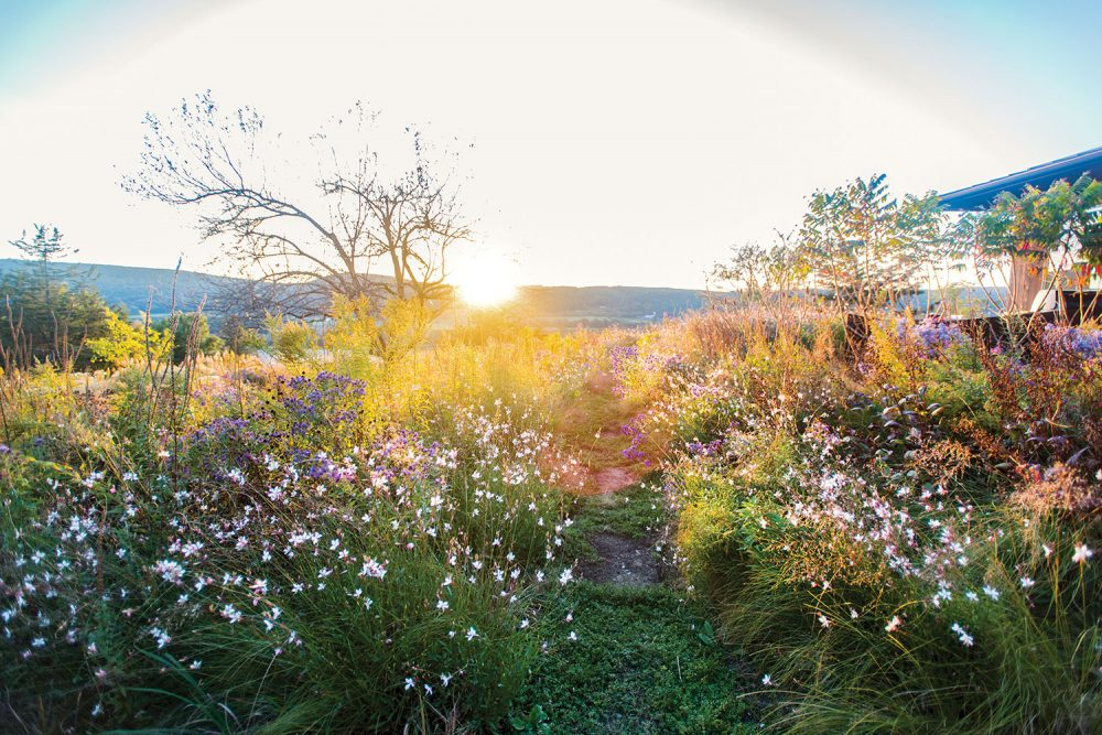 Sunrise view of Jamie Purinton's meadow landscape design in the Hudson Valley