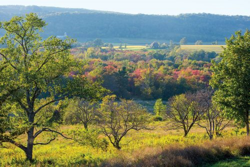Beyond the meadow landscape and orchard is an expansive view of a lush green valley, with copse of trees just starting to turn red and yellow for autumn