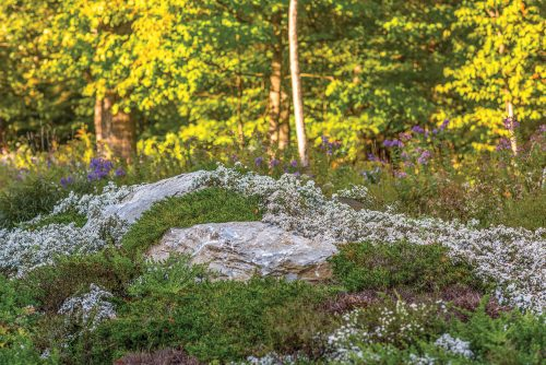 Rocky outcropping surrounded by thick patches of white blooms and other green ground covers