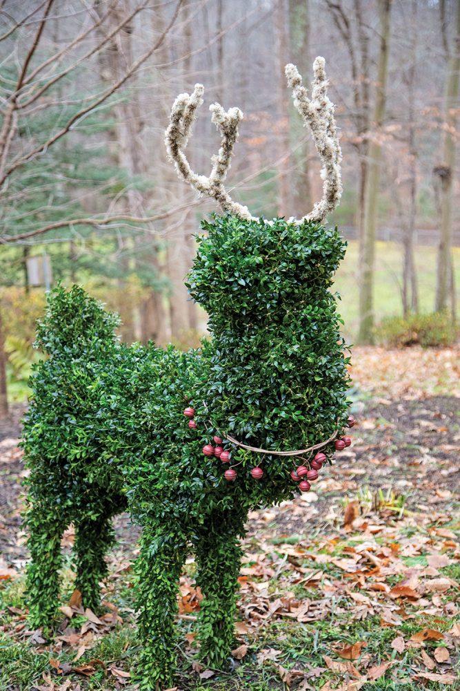 boxwood reindeer