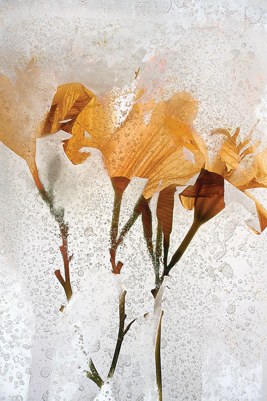 """""""Daylily"""" by Sam Stapleton"""
