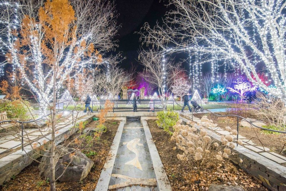 Nighttime scene with Christmas Lights at the arboretum in Asheville, NC