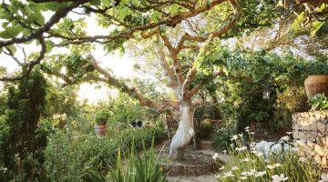 Moroccan garden