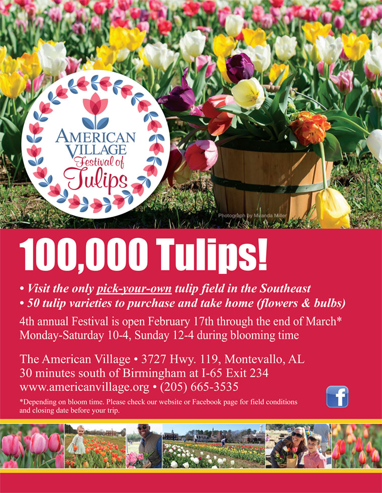 American Village Festival of Tulips: 100,000 tulips! Visit the only pick-your-own tulip field in the Southeast. 50 tulip varieties to purchase and take home (flowers & bulbs). 4th annual Festival is open February 17th through end of March, Monday through Saturday 10 a.m. to 4 p.m., and Sunday noon to 4 p.m., depending on bloom time (check website or Facebook page for updates). The American Village is located at 3727 Highway 119, Montevallo, AL 35115, 30 minutes south of Birmingham via I-65 South Exit 234. (205) 665-3535