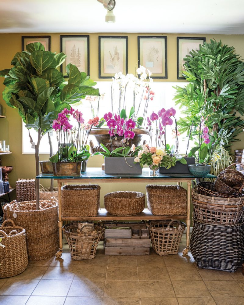 Santa Barbara shopping: potted orchids, potted trees, and baskets of all shapes, styles, and sizes at Hogue & Co. flower shop