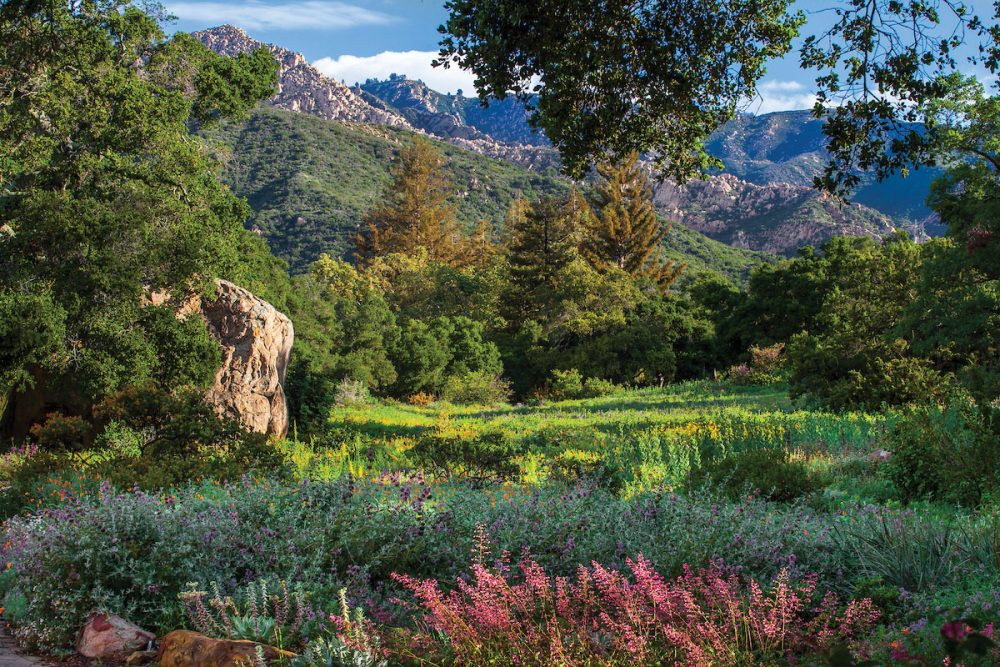 Wildflower meadow and Blaksley Boulder at Santa Barbara Botanic Garden with Santa Ynez Mountains and Cathedral Peak at Santa Barbara Botanic Garden