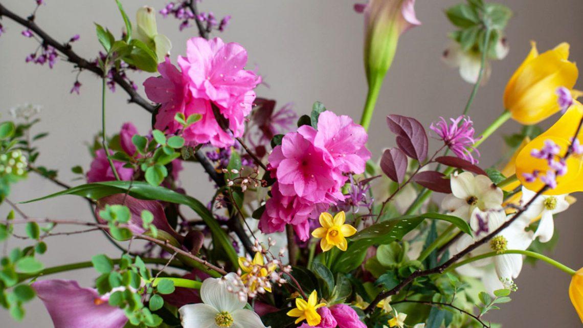 Holly Carlisle: Seasonal Sketch: Spring Flowers