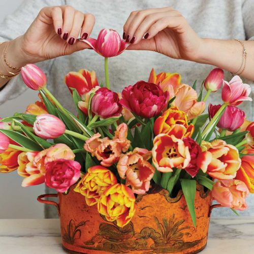Step 5: Mimi Brown manual opens tulip petals for arrangement