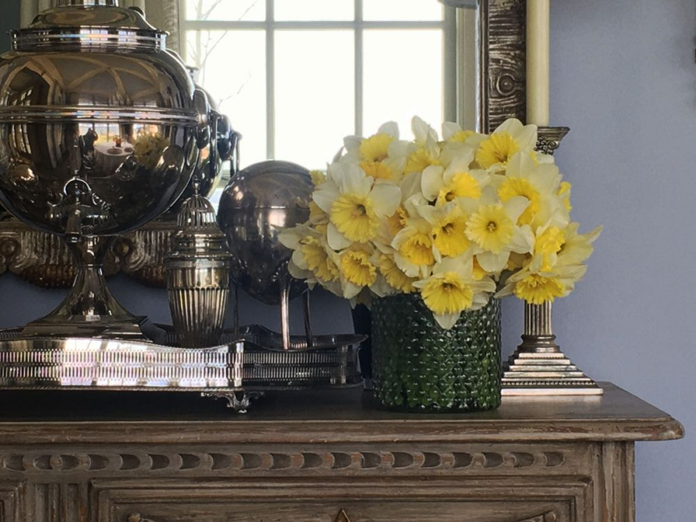 daffodils, East Hampton home of Marshall Watson